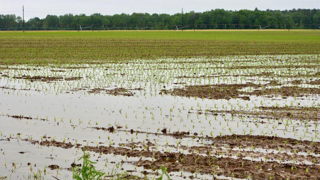 Flooded Fields in Delaware