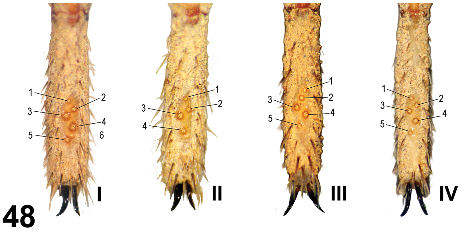 Trichobothria leg hairs